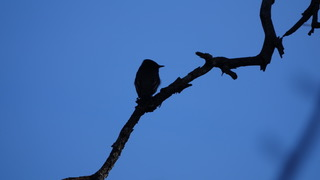 bird silhouette Heather Hudson photos